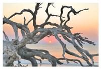 Sunrise Sentinel Fine Art Print