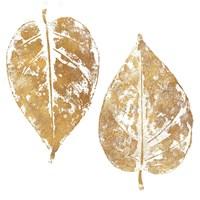 Gold Otono II (gold foil) Fine Art Print
