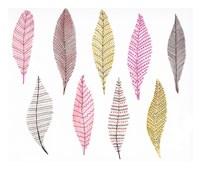 Feathers Fine Art Print