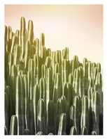 Pink Sky Cactus Fine Art Print