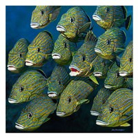 Shoal of Grunts Fine Art Print