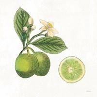 Classic Citrus III Fine Art Print