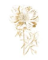 Gilded Botanical VIII Fine Art Print