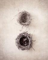Nest IV Fine Art Print
