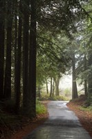 Forest Road Fine Art Print