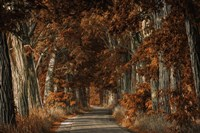 Rusty Road Fine Art Print