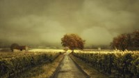 Through The Vineyard Fine Art Print