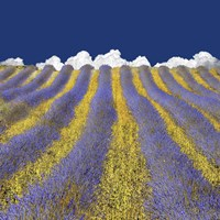 Lavender Heaven Fine Art Print