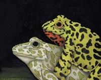 Horny Toads 3 Fine Art Print