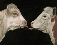 Cow Lick Fine Art Print