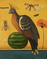 Hoatzin Fine Art Print