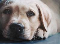 Dog's-Eye View Fine Art Print