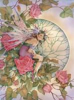 Morning  Rose Fine Art Print