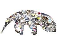 Anteater Fine Art Print