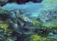 Tranquility Atlantic Bottlenose Dolphins Fine Art Print