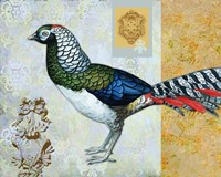 Diamond Pheasant Fine Art Print