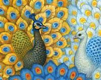 Peacocks Fine Art Print