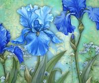 3 Irises Fine Art Print