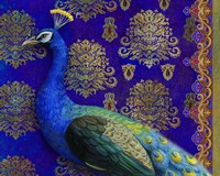 Indian Peacock Fine Art Print