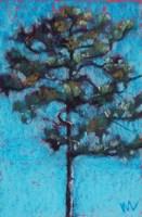 Tall Pine, Blue Sky, Julington Durbin Preserve Series Fine Art Print