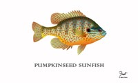 Pumpkinseed Sunfish Fine Art Print