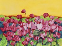 Pink Cyclamen Fine Art Print