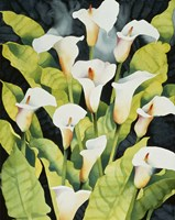 Midnight Callalilies Fine Art Print