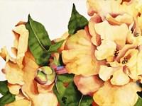Orange Blossom Fine Art Print