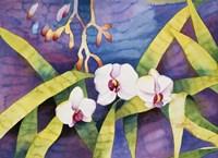 Water Orchids Fine Art Print