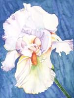 White Iris Fine Art Print