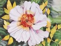 New Poppy Fine Art Print