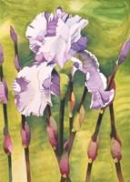 Forest Iris Fine Art Print