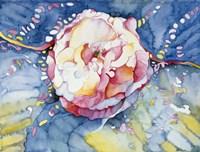 Essence Rose Fine Art Print