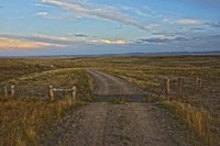 Knowing Which Cattle Guard To Cross Fine Art Print