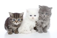 Kittens 6 Fine Art Print