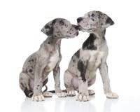 Puppies 4 Fine Art Print