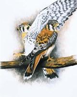 Elegant Raptor Fine Art Print