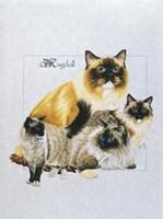 Ragdoll Fine Art Print