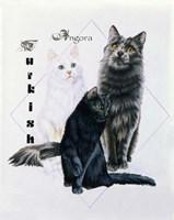 Turkish Angora Fine Art Print