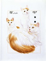 Turkish Van Fine Art Print