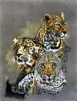Shadow Hunter Fine Art Print