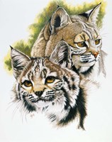 In The Woods Fine Art Print