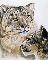 Panthera Uncia Fine Art Print