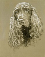 Field Spaniel Fine Art Print