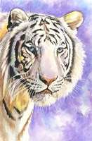 White Tiger Fine Art Print