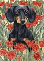 Dachsund In Tulips Fine Art Print