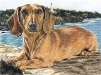Dachshund In The Bay Fine Art Print