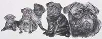 Growing Up Pug Fine Art Print