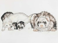 Family Of Ferrets Fine Art Print