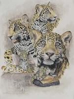 Jaguars Fine Art Print